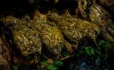 la-merced-mexico-stefano-morrone-11-small